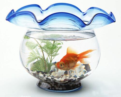 鱼缸正确的摆放 助你升职加薪