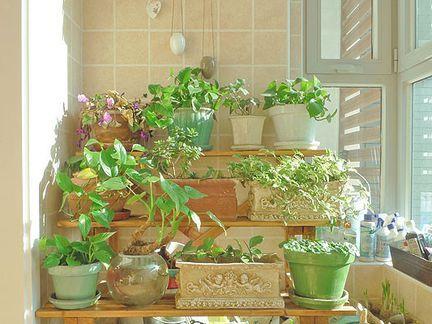 怎样充分利用阳台做好居室绿化