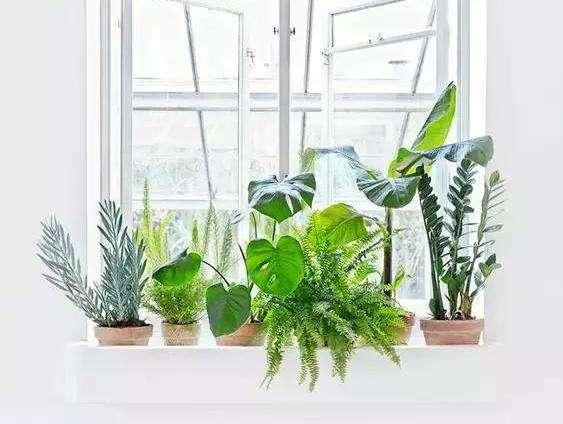室内绿饰的配置原则是什么