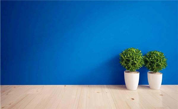 不同房间不同场所绿饰应如何摆放