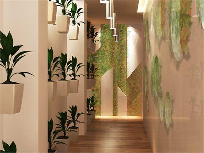 不同房型如何配置绿饰