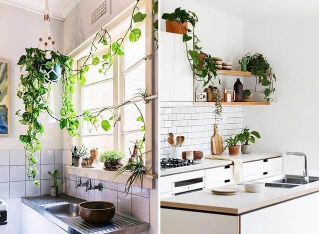 怎样在居室内养花